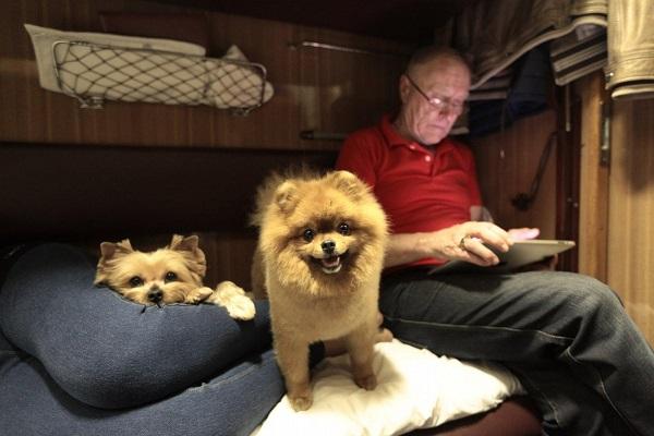 В поезде играют в карты казино мистер грин